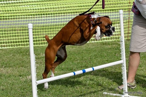 Dog Agility Training Naperville Il