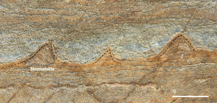 The Oldest Fossils Ever Discovered, 3.7 Billion Years Old