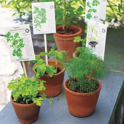 Create markers by stapling a plant's seed packet to a chopstick and placing it inside the pot or bed. |   Photo: Wendell T. Webber | thisoldhouse.com