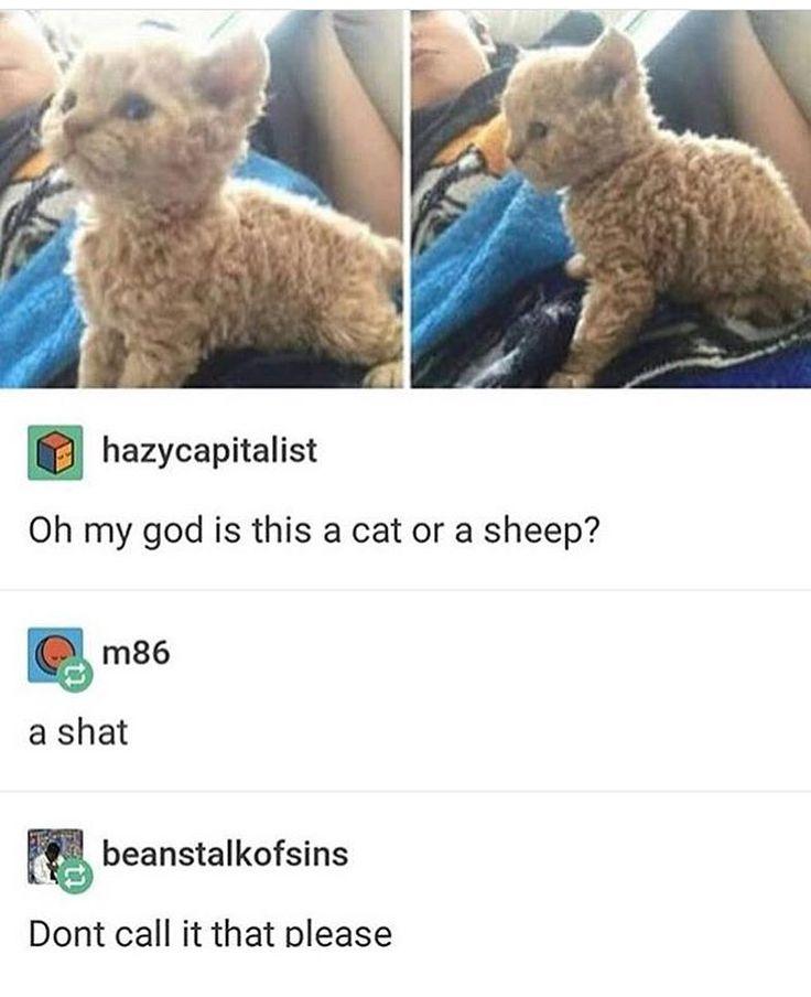 No no no. You need to call it a ceep, and say it like keep cause it's so cute it's a keeper. Lol