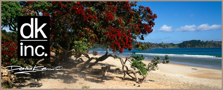 Pohutakaw in flower christmas | New Zealand Photography, Canvas Prints, Photographer David Kerr