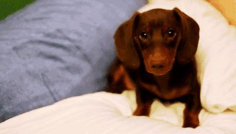 beautifully bashful pup