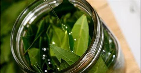 Cette feuille vous aide à lutter contre insomnie, le diabète, et l'hypertension artérielle !!