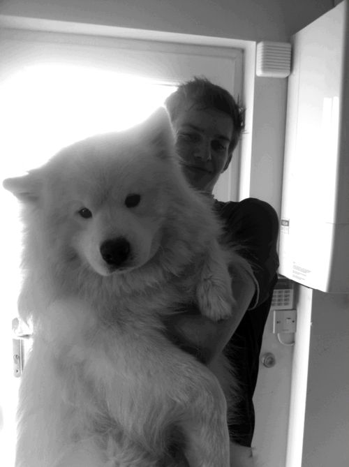 OMG its a monster dog and its friendly and fluffy