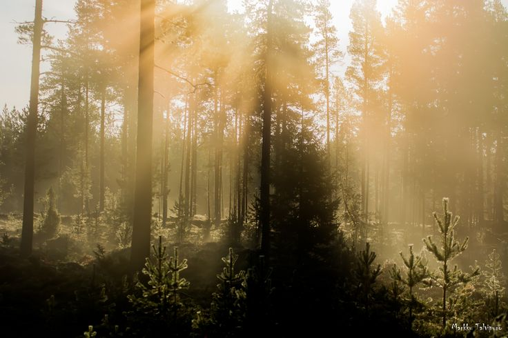 The Mist by Markku T on 500px