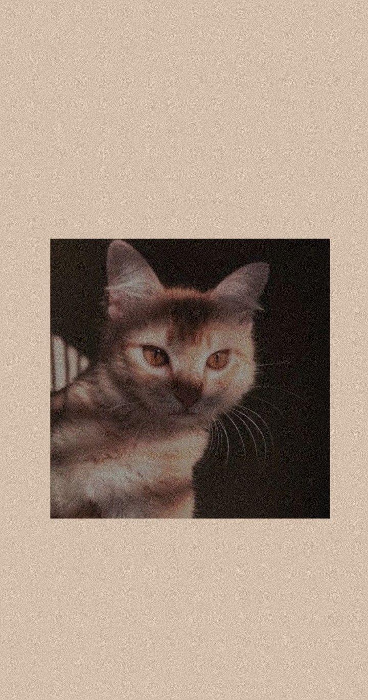 Cat Aesthetic Boneka Hewan Hewan Wallpaper Ponsel