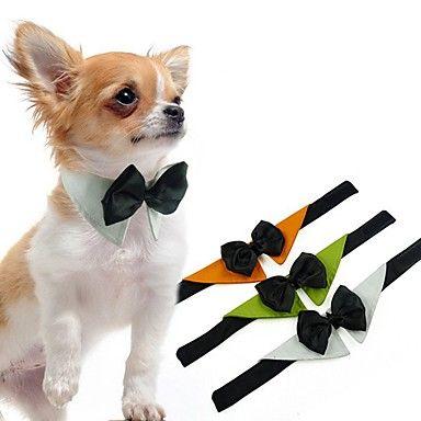25 best ideas about accessori per cani su pinterest for Cartamodello papillon