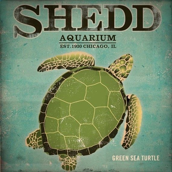 Shedd Aquarium Green Sea Turtle graphic by geministudio on Etsy, $39.00