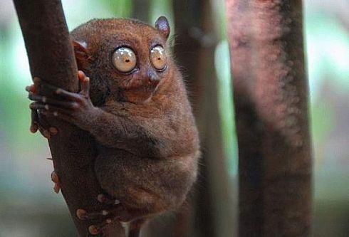 57 best images about Marsupials on Pinterest | Wombat ...
