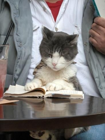 """Must resist the """"I thought you told me this book was about 'pussy' joke"""" ... oh never mind ... ;-)~"""