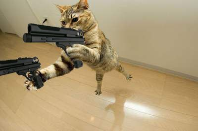 cats with guns pictures | Cats With Guns | THEDINGLEBERRY ...