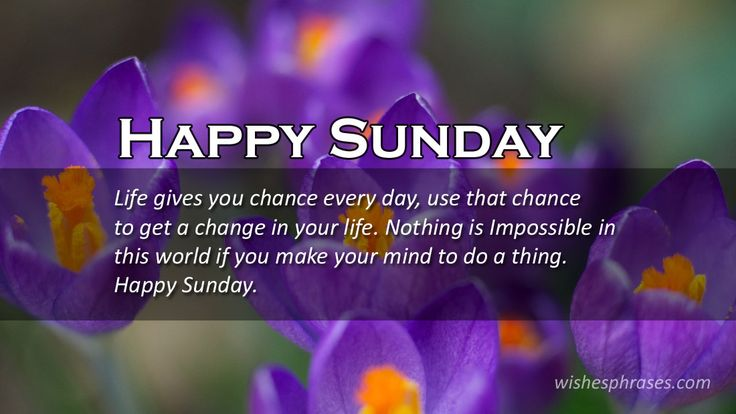 After all of the fatigues of the whole week, there came the weekend. With Happy Sunday Wishes Make your Sunday special with your special person by starting it by wishing them Hello Sunday Messages Sms