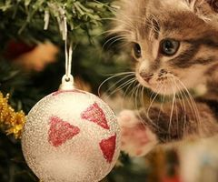Christmas and a kitten; what could be better?
