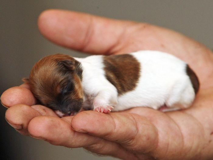 Cão bebê uóimmm