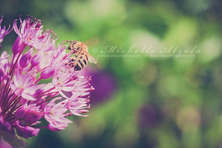 Bee Still :)