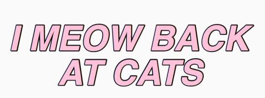 Meow de vuelta a los gatos.