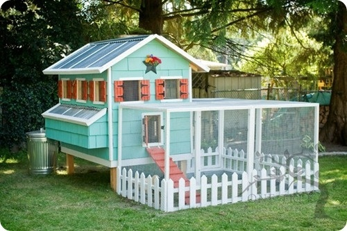 Chicken Coop future