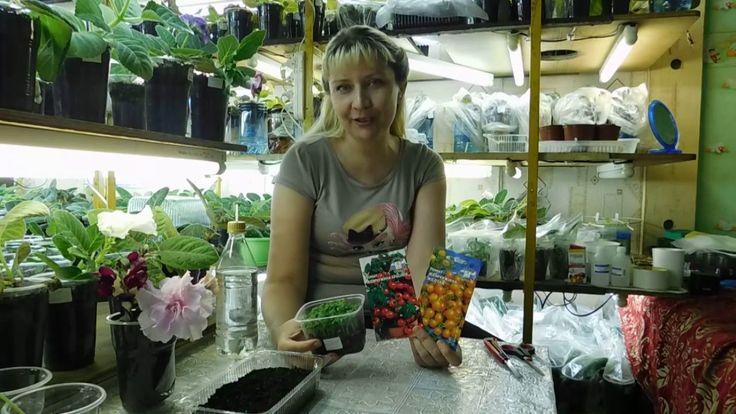Посев томатов с кипятком !