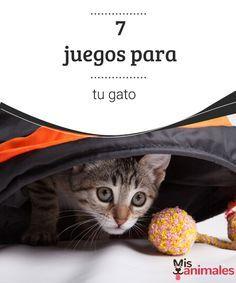 7 juegos para tu gato  Los gatos necesitan al menos 30 minutos de juegos diarios; así fomentarás el ejercicio físico y evitarás que se convierta en un gato sedentario. #juegos #gato #sedentarismo #consejos