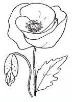 disegni/fiori/papavero.JPG