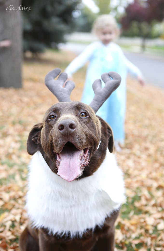 DIY Sven Costume for a Dog