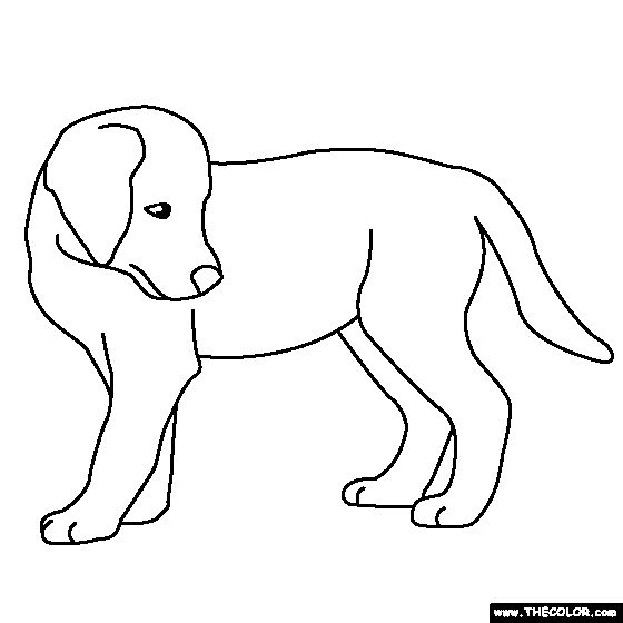 Free Coloring Page Of A Golden Retriever Puppy Color In This Picture And Share It With Others Today