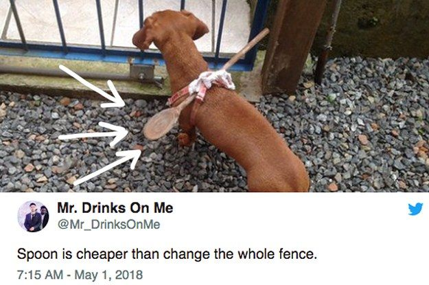 22 Incredibly Important Dog Tweets That Need Your Full And