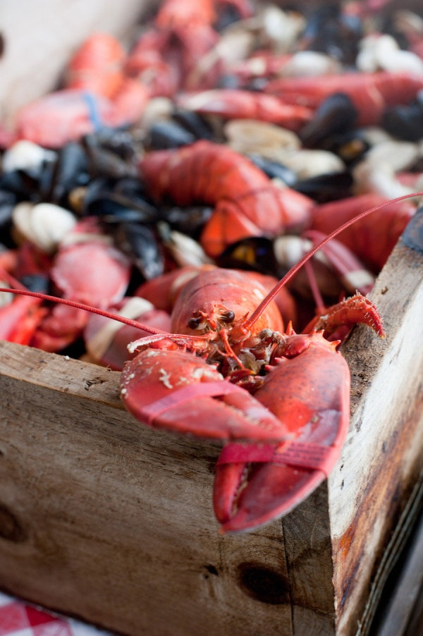 lobster and clam bake for a wedding!!!