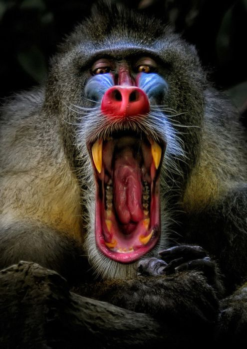 478 best Animals All Types Creepy Scary Ugly & Weird