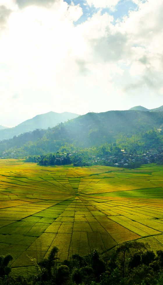 The spiderweb rice fields of Rinca in flores, indonesia. They have this distinctive shape, because of the land use patterns used by farmers in the region.