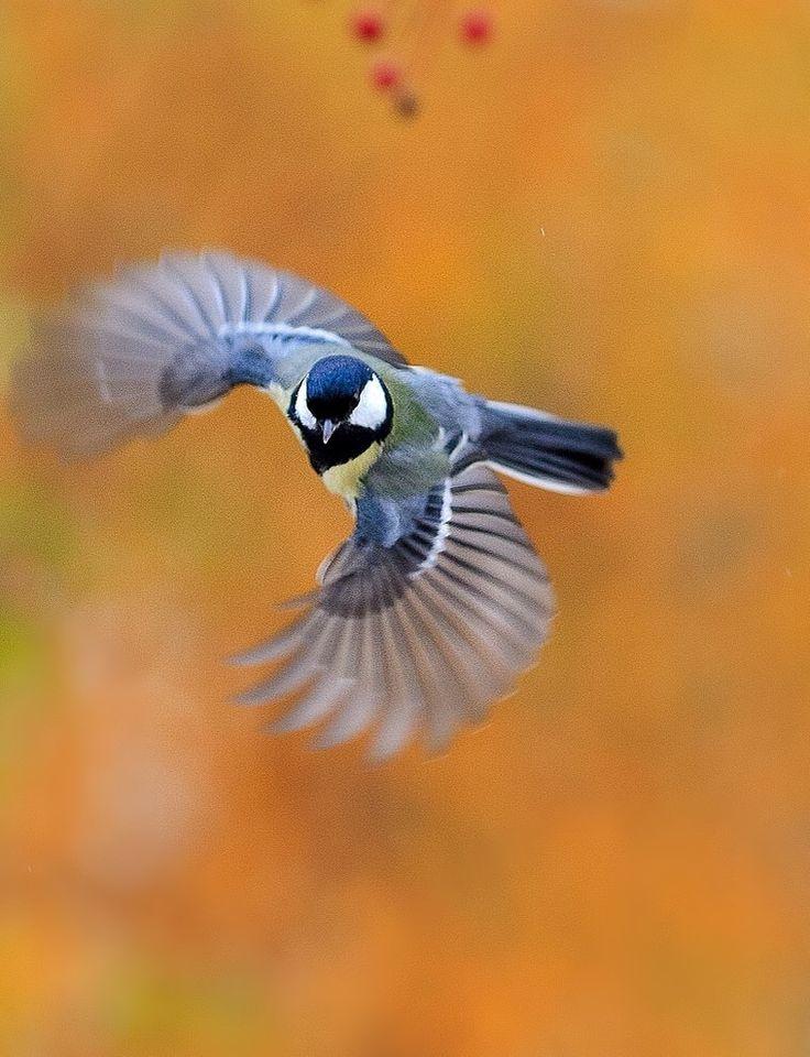 птички в полете картинки том, что этом