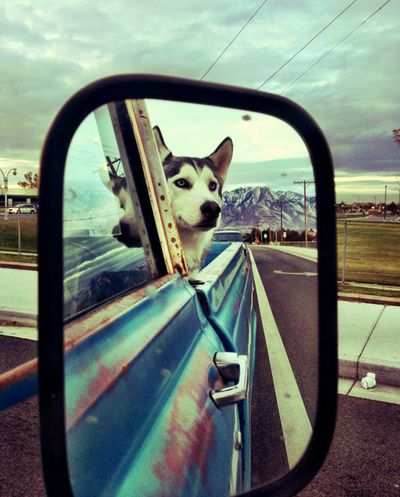 Apparently Duke has been joyriding in other people's cars! haha It looks just like him!