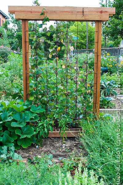 136 best images about garden trellis and staking on for Vegetable garden trellis