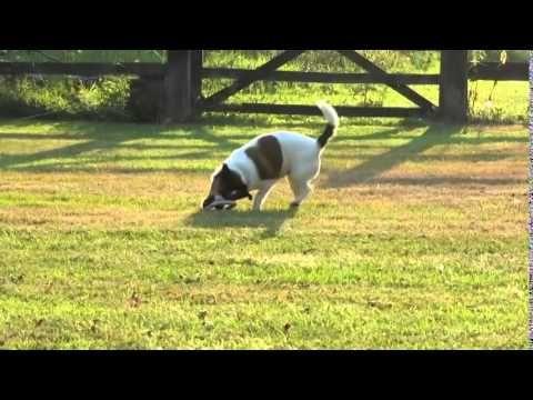 BecoHoop Juguete Ecológico para Perro - Mascositas