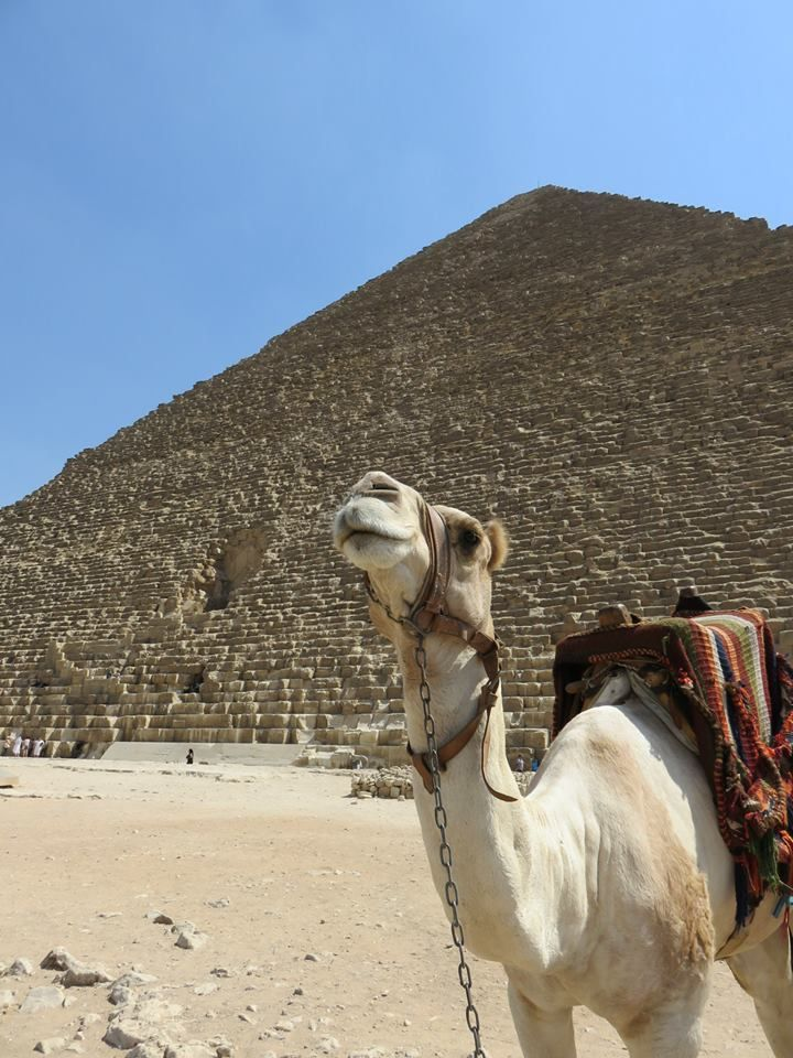 Of camels and #Pyramids! That is what Divya saw as she landed in #Cairo, excited and overjoyed to grab her dream in #Egypt!
