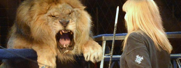 Звери в цирке — живодерство в... http://uinp.info/important_news/zveri_v_cirke_8212_zhivoderstvo_v_zakone  В Украине продолжается дискуссия об использовании животных в цирках. В конце ноября цирковые артисты из Днепра вышли на пресс-конференцию и сказали, что если цирковых животных запретят, то их придется умертвить, а цирковое искусство умрет как таковое. В продолжение дискуссии Забеба публикует целиком очень эмоциональный пост из ФБ Марины Шквыри, кандидат биологических наук Института…