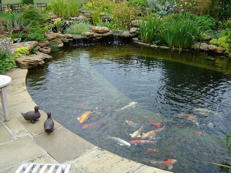 Natural formal hybrid pond me likely ponds pinterest for Natural koi pond