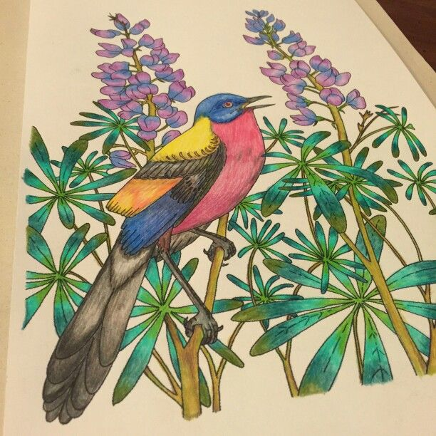 I miei coloring