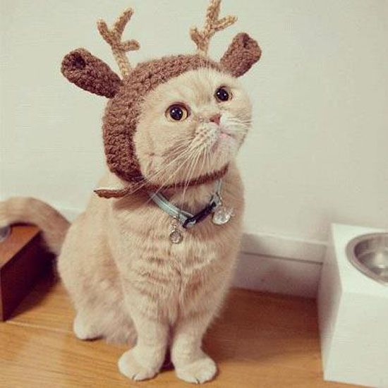 Draw, collage, photoshop a pet in a festive costume. It's okay, cats and dogs know no shame. Media is up to you.