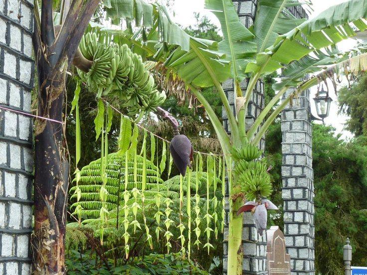 Kerala wedding entrance banana and coconut decoration for Artificial banana leaves decoration