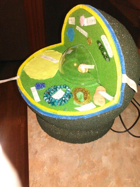 Homemade plant cell model 3d ccuart Choice Image