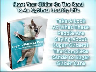 """Sugar Gliders As Pets! The Complete Guide To Sugar Glider Care. """"Who Else Wants To Know How To Properly Care For And Improve The Lifestyle Of Your Sugar Glider in 7 Days (Or Less) – Guaranteed?"""" If you are interested in learning everything there is to know about sugar gliders, than this is going to be the most important information you'll ever read..."""