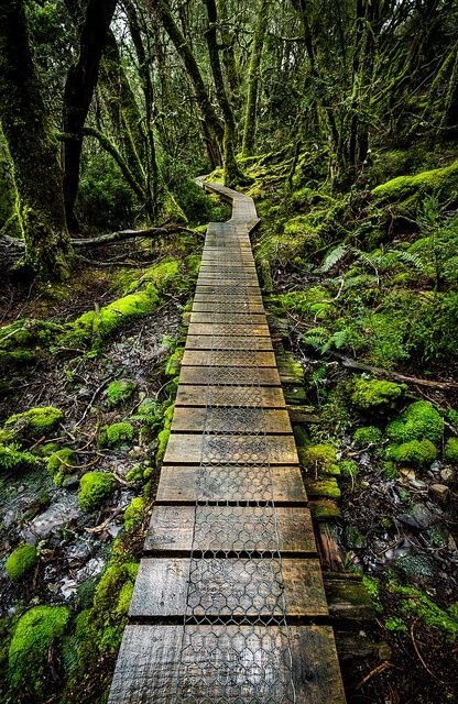 Enchanted Forest, Tasmania. I would love to get lost here, perhaps meet a fairy or some mythical creature along the way.