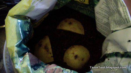 Aardappelen planten in zakken met Tante Tuut