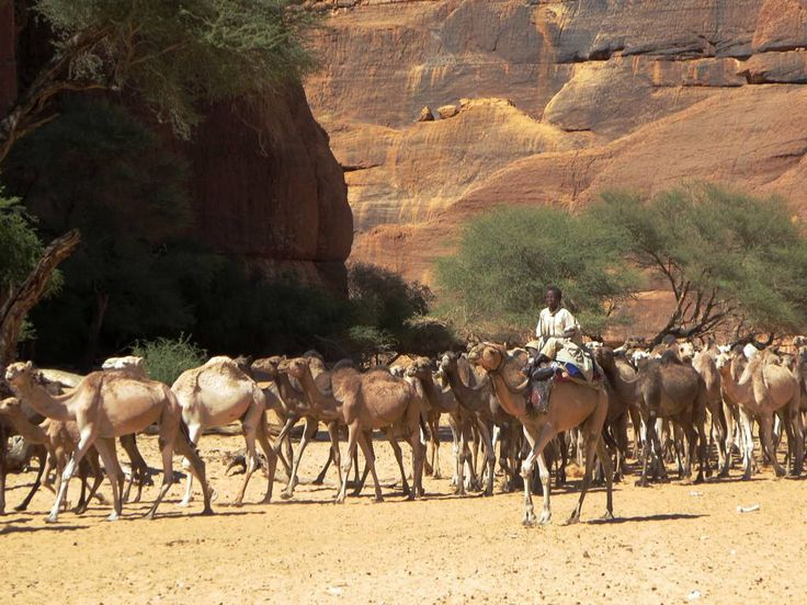 Toubou herders bring their camels to Guelta d'Archei in the Ennedi Mountains of northeastern Chad, Central Africa.