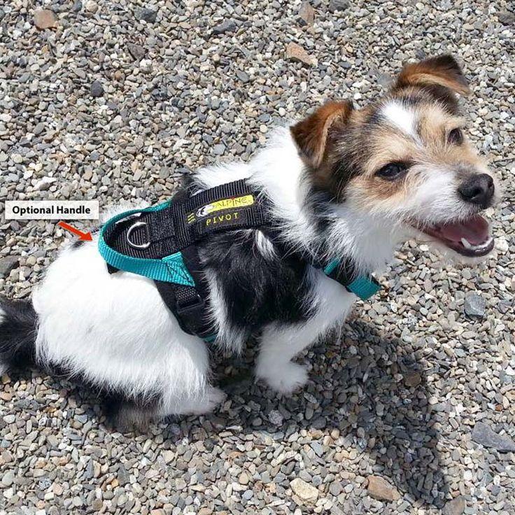 Custom-Made Padded Urban Trail Sport Dog Harness