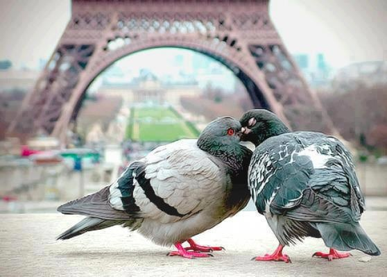 Paris = The city of L O V E