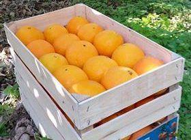 Cassetta arancia varietà Navelina Fioroni kg 16,7