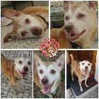 PZ - Adopção de Cadela - Cão Rafeiro - Pepa - 10 anos acolhido(a) por Associação Cão Viver