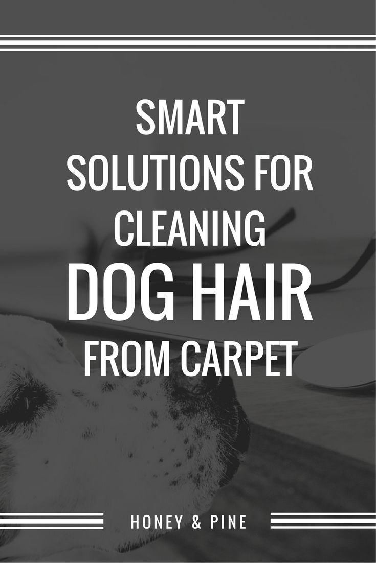 I love my dogs but I don't love the time and energy cleaning dog hair from carpet requires. Fortunately, there are a few smart solutions!